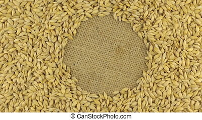 Rotation of the barley grains lying on sackcloth with space for your text