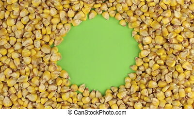 Rotation of the corn grains lying on a green screen, chroma key.