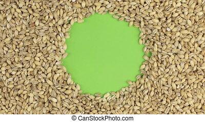 Rotation of the pearl barley grains lying on a green screen, chroma key.