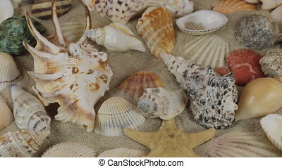 Rotation of the sea stars and sea shells lying on the sand....