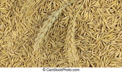 Rotation of the spikelets of wheat lying on the oats grains....