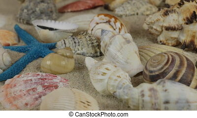 Rotations of sea shells and sea stars lying on the sand. Close-up.