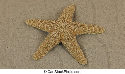Rotations of the sea starfish on the dunes. Beauty in nature.