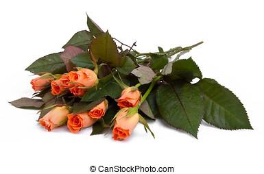 rote rosen, freigestellt, auf, whi