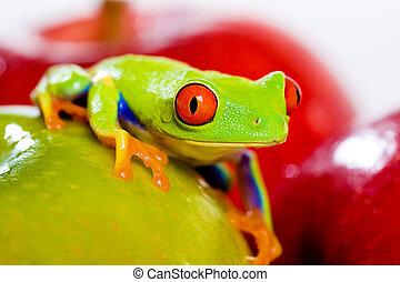 roter gemusterter baum- frosch, mit, frische frucht