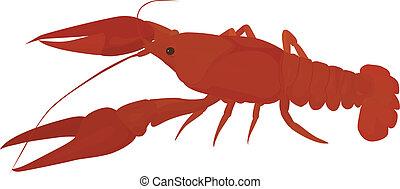 rotes , crayfish