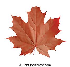 rotes , vektor, freigestellt, abbildung, leaf.