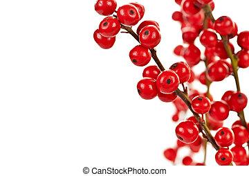 rotes , weihnachten, beeren