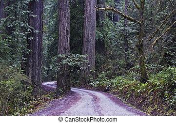 rothölzer, park., redwood, national