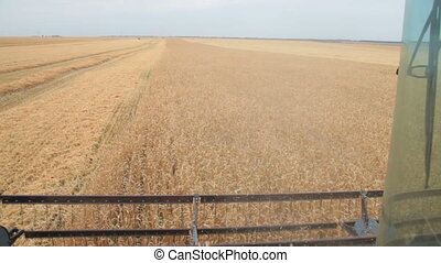 combine harvester cuts wheat ears