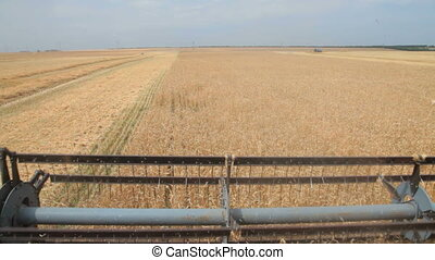 combine harvester cuts wheat ears - rotor of combine...