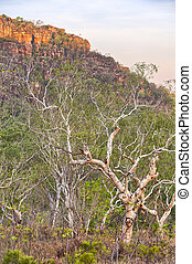 rots, Australië,  Nourlangie