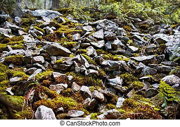 rots, textuur, mos, achtergrond, groene, effect, ideaal