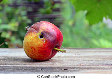 Rotten and  worm-eaten wormy apple on a wooden table