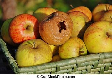 Rotten apple in the basket - A wicker basket of apples with...