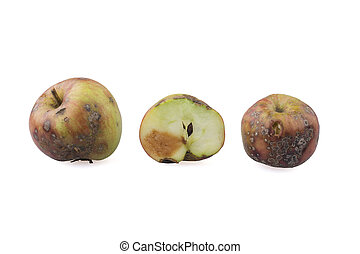 Rotten apples - Three rotten apples on the white background