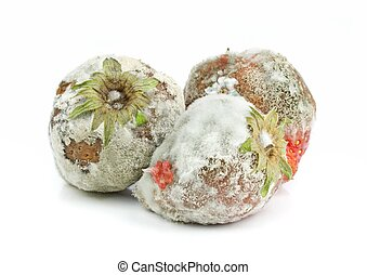 Rotten Mouldy Strawberries - Rotten mouldy strawberries on a...