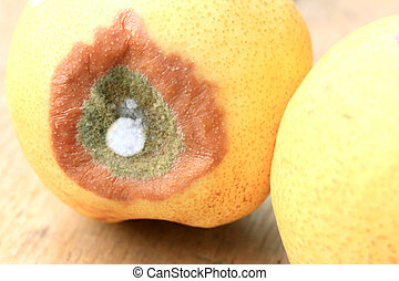 rotten pear fruit on wood vintage
