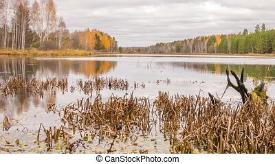 Rotten snag in the pond. Autumn, Russia. Panorama. Time Lapse