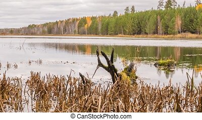 Rotten snag in the pond. Autumn, Russia. Zoom. Time Lapse