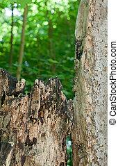 Rotten Stump Detail