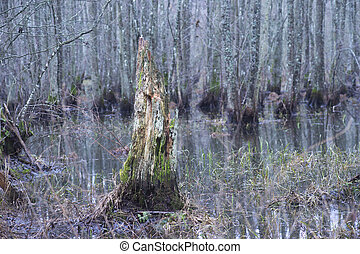 Rotten tree stump in flooded forest