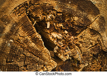 Detail of ripper rotten wood background, focus on tree center