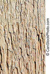 Rotten wood close up - Surface of rotten wood photographed...