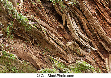 Rotten wood background closeup