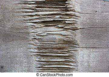 Rotten wood.
