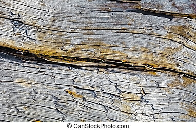 Rotten wood with crack - Surface of rotten wood with crack...