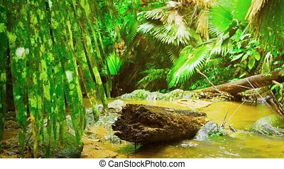 Rotting log, covered in moss, lies lodged between rocks in a muddy, shallow, tropical stream with dense rainforest foliage all around, with sound.