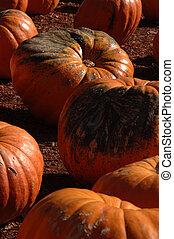Rotting Pumpkins