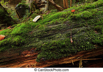 Rotting tree with moss