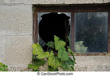 rotto, finestra, uva, edera