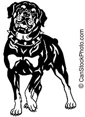 rottweiler black white - dog rottweiler breed, front view, ...