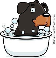 rottweiler, caricatura, baño