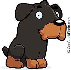 rottweiler, cartone animato, seduta