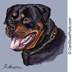 Rottweiler colorful vector hand drawing portrait