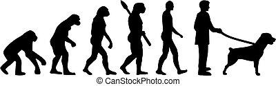rottweiler, evolución