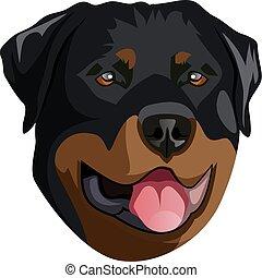 Rottweiler - illustration