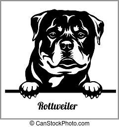 Rottweiler - Peeking Dogs - breed face head isolated on ...