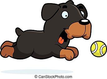rottweiler, pelota, perseguir, caricatura