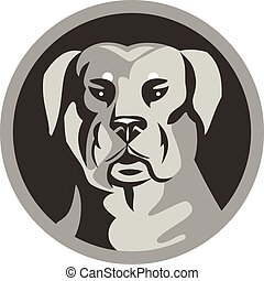 rottweiler, tête, chien, garde, milieu noir, blanc