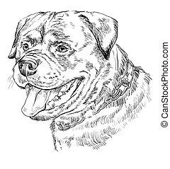 Rottweiler vector hand drawing portrait