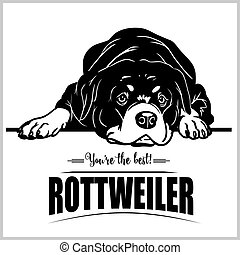 Rottweiler - vector illustration for t-shirt, logo and template badges