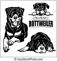 Rottweiler - vector set isolated illustration on white background