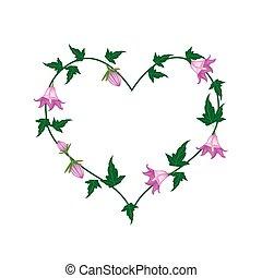 rotundifolia, forma coração, flores, campânula