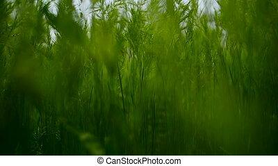 roue bicyclette, dans, été, herbe verte