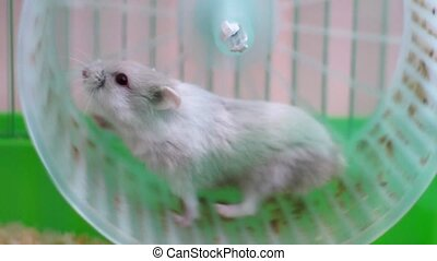 roue, cage, hamster